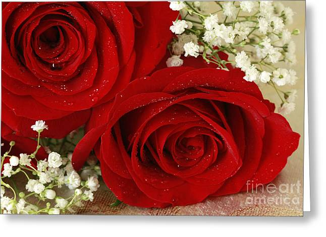 Royal Velvet Roses Greeting Card by Inspired Nature Photography Fine Art Photography