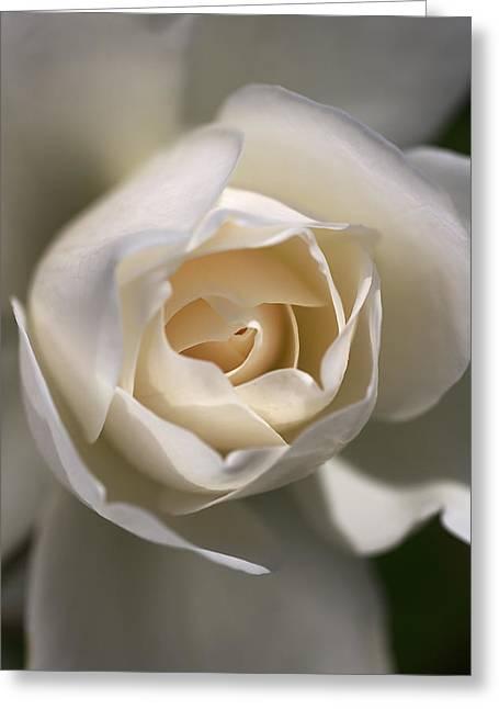 Royal White Greeting Card by Joy Watson