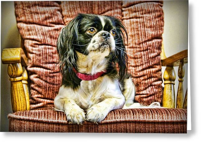 Japanese Puppy Greeting Cards - Royalty - Japanese Spaniel Greeting Card by Cricket Hackmann