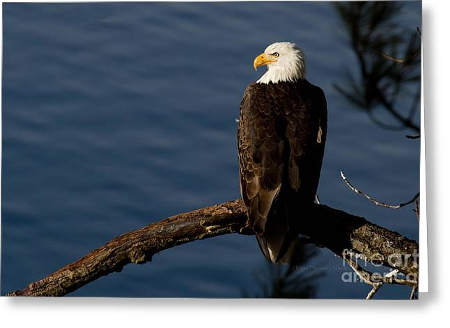 Eagle Greeting Cards - Royalty Greeting Card by Reflective Moment Photography And Digital Art Images