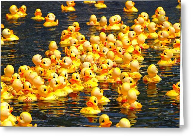 Fund Raiser Greeting Cards - Rubber Duck Race Greeting Card by Allen Beatty