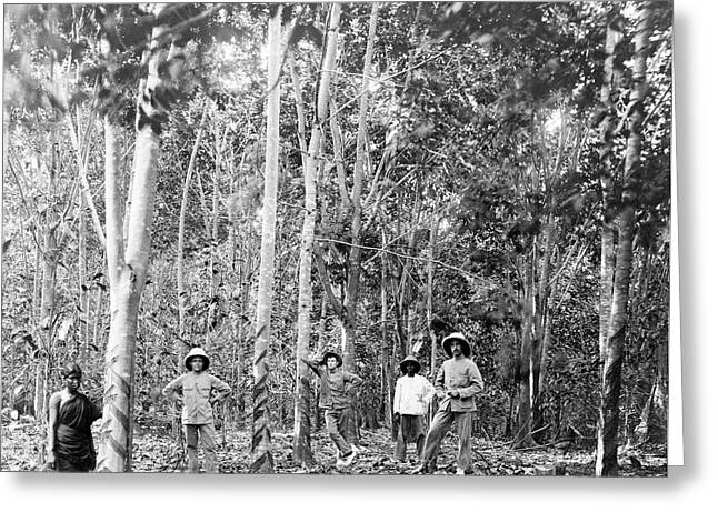 Rubber Tree Plantation Greeting Card by Library Of Congress
