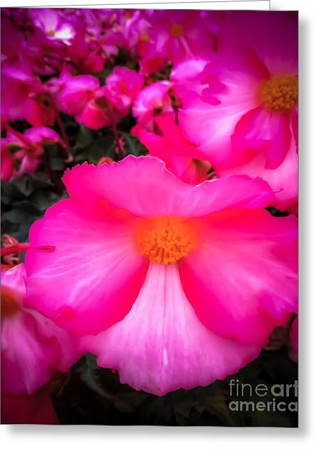 Alaska Greeting Cards - Ruby Begonia Greeting Card by Susan Serna