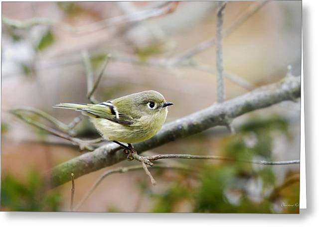 Bird In Tree Greeting Cards - Ruby-Crowned Kinglet Greeting Card by Christina Rollo
