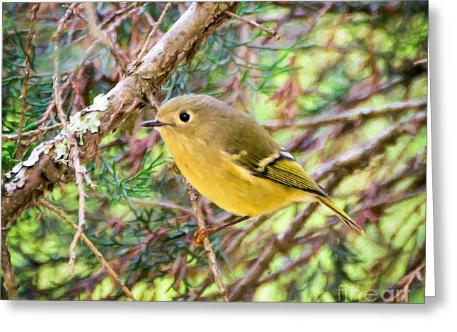 Ruby-crowned Kinglet Birds Greeting Cards - Ruby-crowned Kinglet in Forest Greeting Card by Kerri Farley