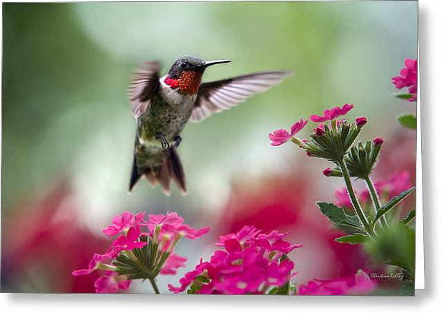 Hovering Greeting Cards - Ruby Garden Jewel Greeting Card by Christina Rollo