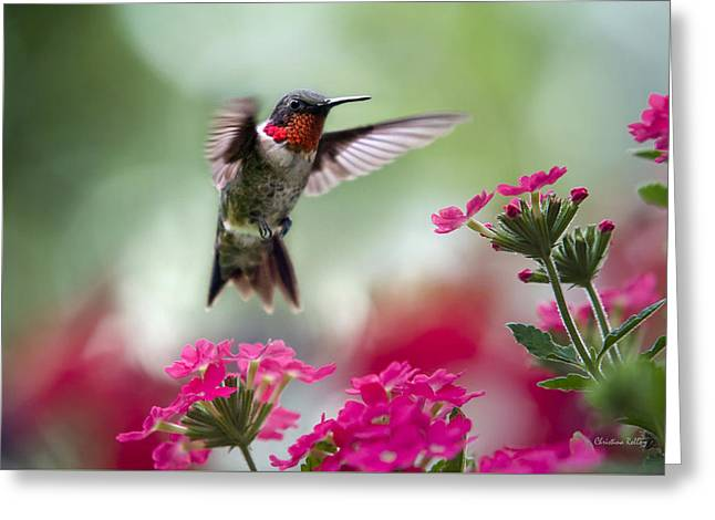 Hummingbirds Greeting Cards - Ruby Garden Jewel Greeting Card by Christina Rollo
