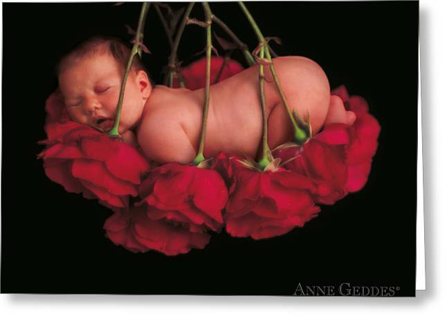 Roses Greeting Cards - Ruby in Rose Greeting Card by Anne Geddes