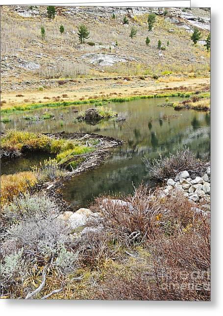 Dam Framed Prints Greeting Cards - Ruby Mountain Beaver Dam Greeting Card by L J Oakes