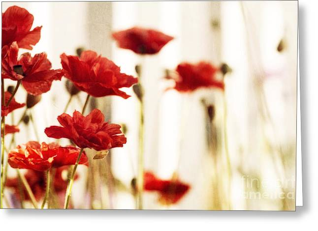 Olives Photographs Greeting Cards - Ruby reds Greeting Card by Priska Wettstein