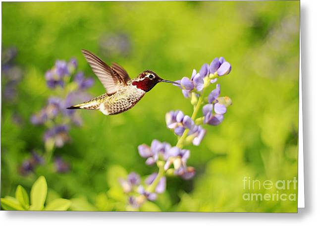 In Depth Greeting Cards - Ruby Throated Hummingbird Greeting Card by Darren Fisher