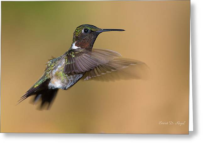 Ruby Throated Hummingbird Greeting Cards - Ruby-throated Hummingbird Greeting Card by Everet Regal
