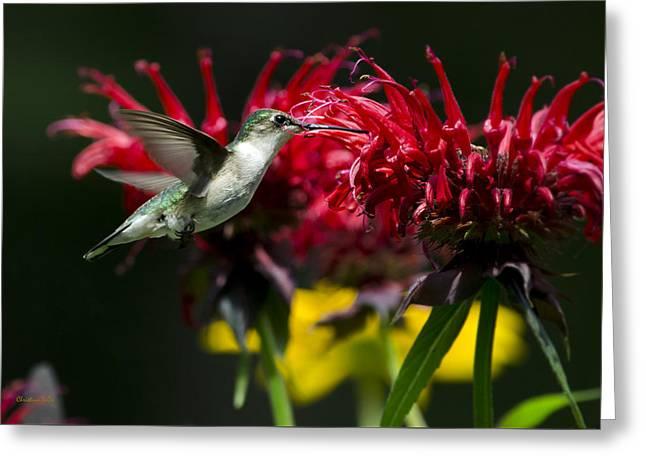 Hummingbird I Greeting Card by Christina Rollo