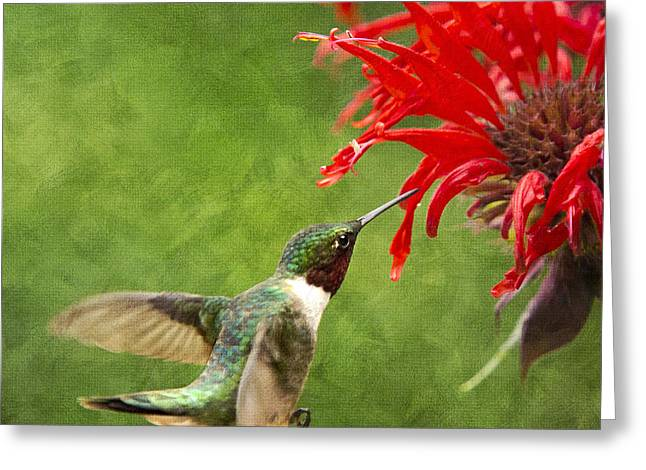 Hovering Greeting Cards - Ruby-Throated Hummingbird With Pretty Red Flowers Greeting Card by Christina Rollo