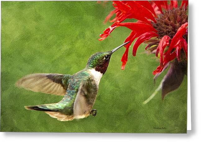 Kolibri Greeting Cards - Ruby-Throated Hummingbird With Pretty Red Flowers Greeting Card by Christina Rollo