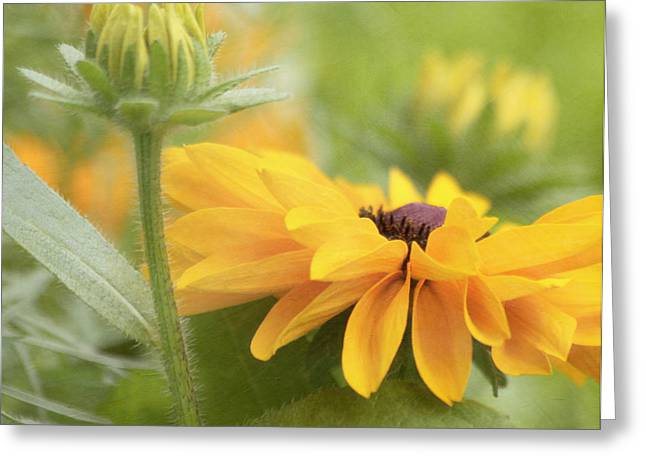 Kim Hojnacki Greeting Cards - Rudbeckia Flower Greeting Card by Kim Hojnacki