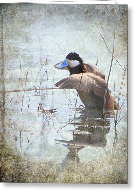 Stretching Wings Greeting Cards - Ruddy Duck Greeting Card by Angie Vogel
