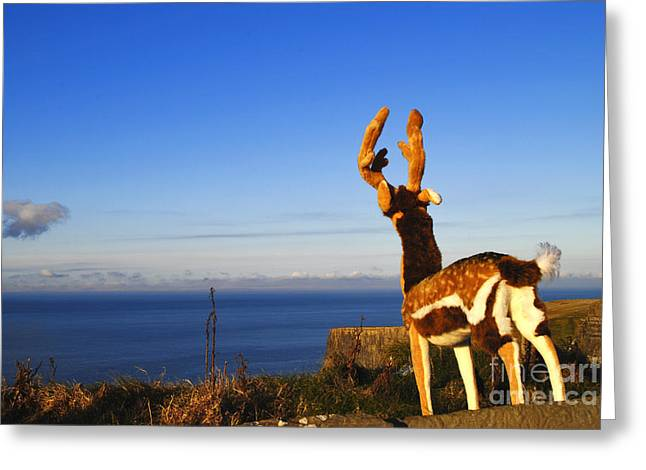 Rudolph Greeting Cards - Rudolph at cliffs of Moher Greeting Card by Maja Sokolowska