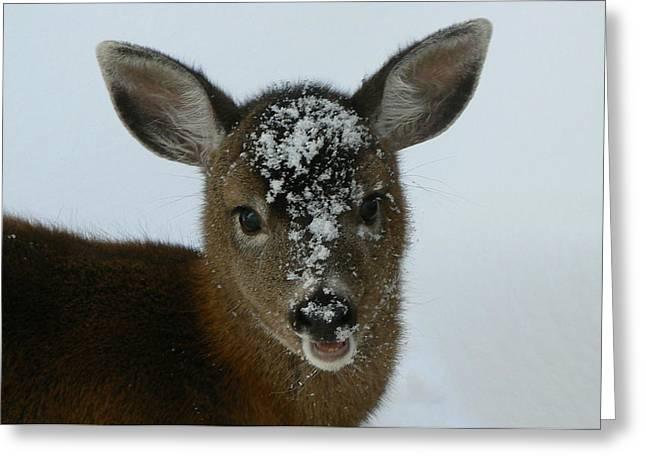Mule Deer Buck Photograph Greeting Cards - Rudy Greeting Card by Tia Marie McDermid