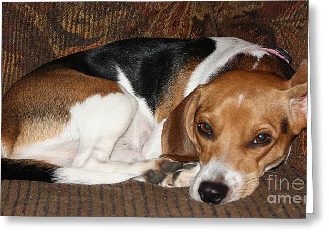 Dog On Couch Greeting Cards - Ruff Day Greeting Card by John Telfer