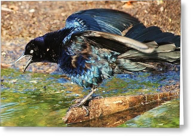 Ruffle My Feathers Greeting Card by Lorri Crossno