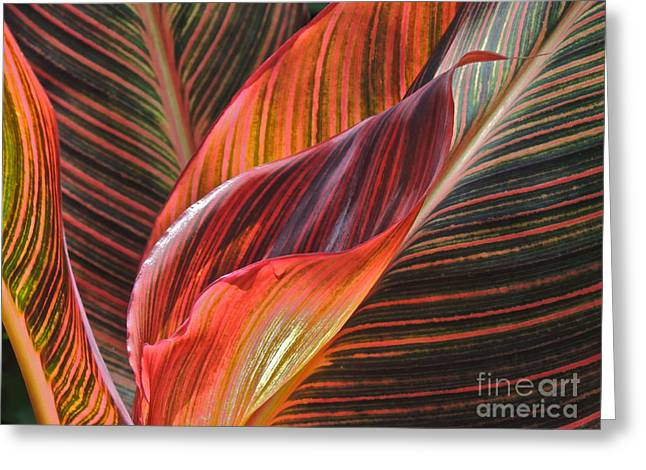 Ruffled Beauty Greeting Card by Eve Spring