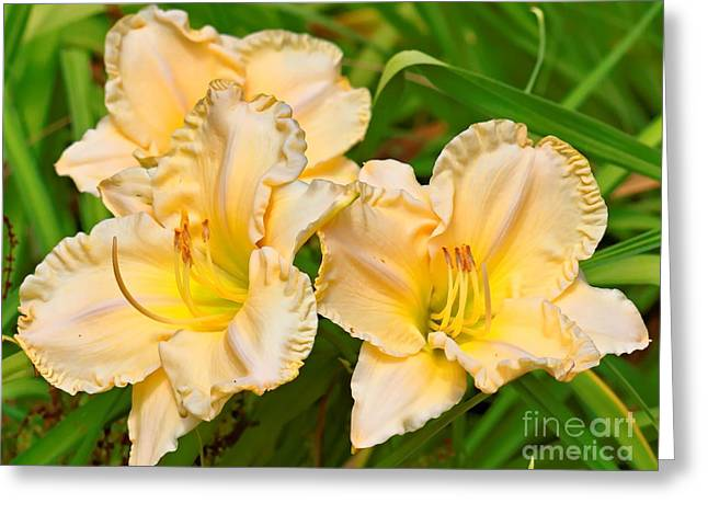 My Ocean Greeting Cards - Ruffled Edges Greeting Card by   FLJohnson Photography