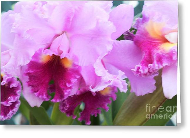 Struckle Greeting Cards - Ruffled Orchids Greeting Card by Kathleen Struckle