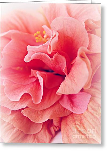 Gardening Greeting Cards - Ruffles Greeting Card by Clare Bevan