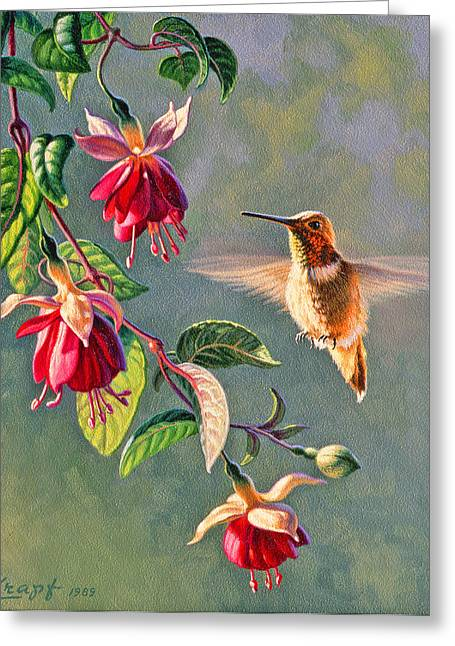 Rufous And Fuschia Greeting Card by Paul Krapf