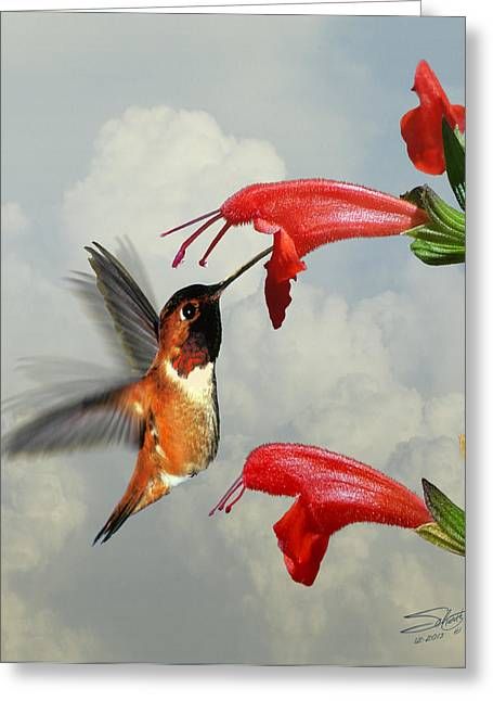 Rufus Greeting Cards - Rufous Hummingbird and Wild Flower Greeting Card by Schwartz