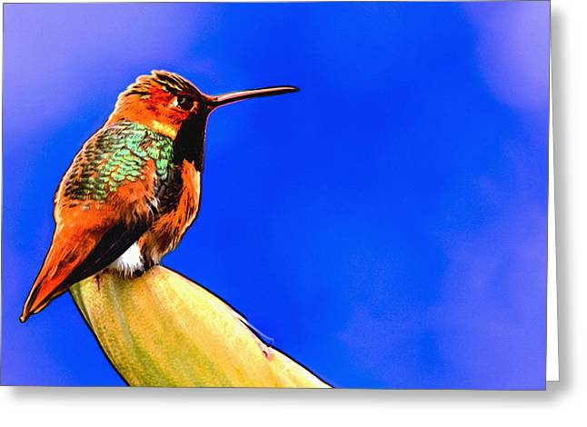 Orange And Brown Wings Greeting Cards - Rufous HummingBird Painting Greeting Card by  Bob and Nadine Johnston