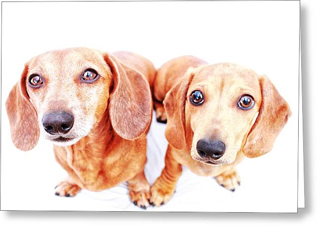 Hounddog Greeting Cards - Rufus and Milo Heart  Greeting Card by Johnny Ortez-Tibbels