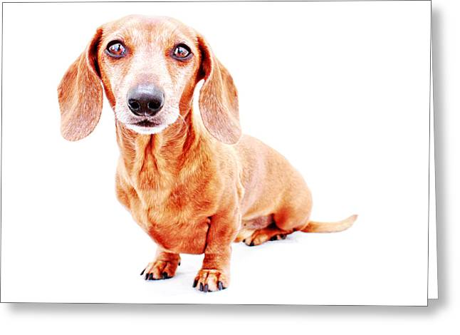 Hounddog Greeting Cards - Rufus Greeting Card by Johnny Ortez-Tibbels