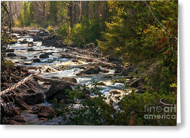 Haybales Greeting Cards - Rugged Alpine Creek Greeting Card by Robert Bales