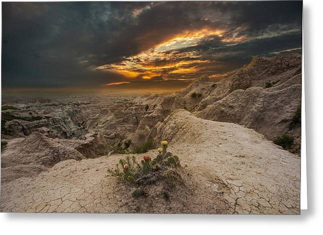 Cactus Flowers Greeting Cards - Rugged Beauty Greeting Card by Aaron J Groen