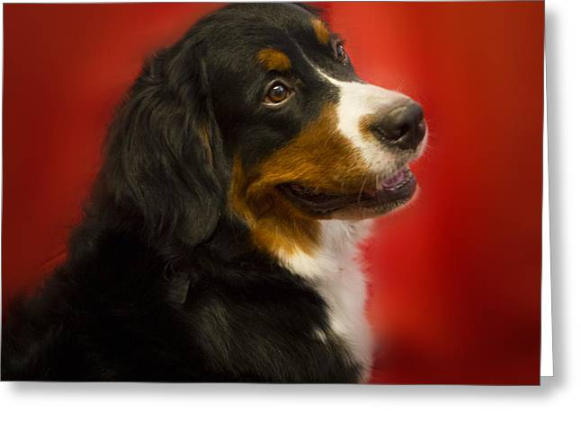 Berner Greeting Cards - Rumor has it Greeting Card by Jean Noren