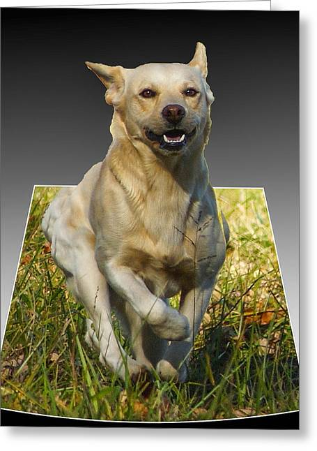 Puppy Pyrography Greeting Cards - Run Puppy Run Greeting Card by B Wayne Mullins