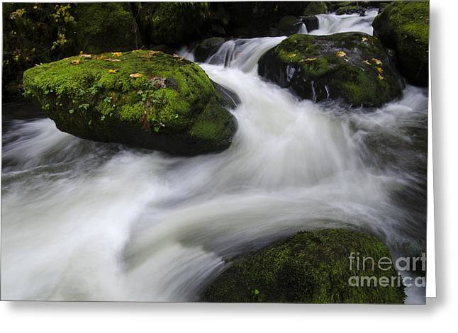 Water In Creek Greeting Cards - Run River Run  Greeting Card by Bob Christopher