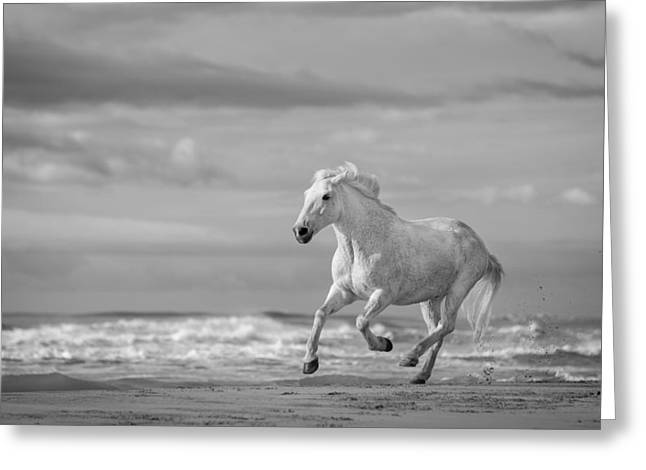 Trot Greeting Cards - Run White Horses VIII Greeting Card by Tim Booth