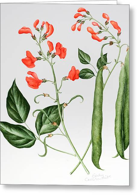 Runner Greeting Cards - Runner Beans Greeting Card by Sally Crosthwaite