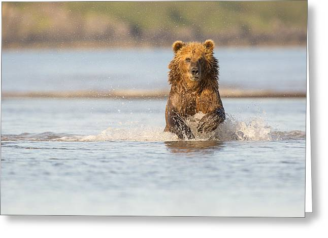 Born Adult Greeting Cards - Running after the Salmon Greeting Card by Tim Grams