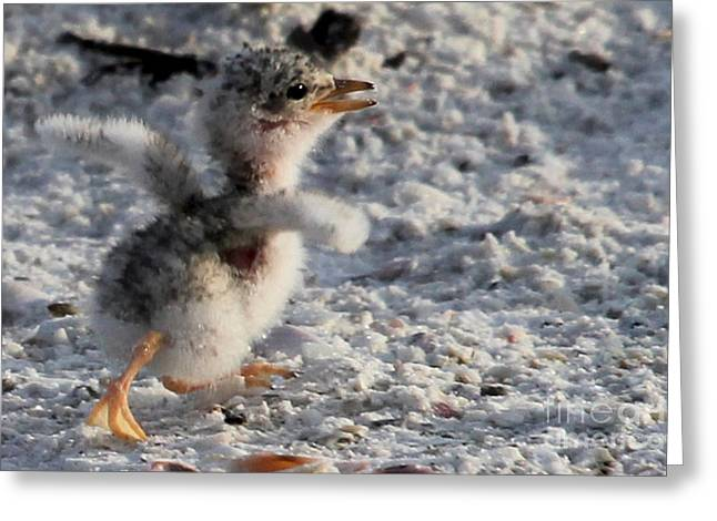 Tern Greeting Cards - Running Free - Least Tern Greeting Card by Meg Rousher