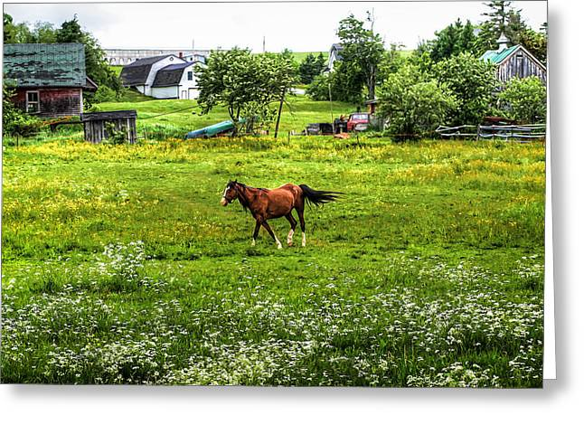 Old Maine Barns Greeting Cards - Running Free Greeting Card by Gary Smith