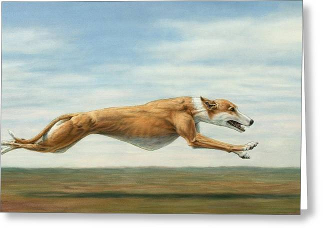 Greyhound Greeting Cards - Running Free Greeting Card by James W Johnson