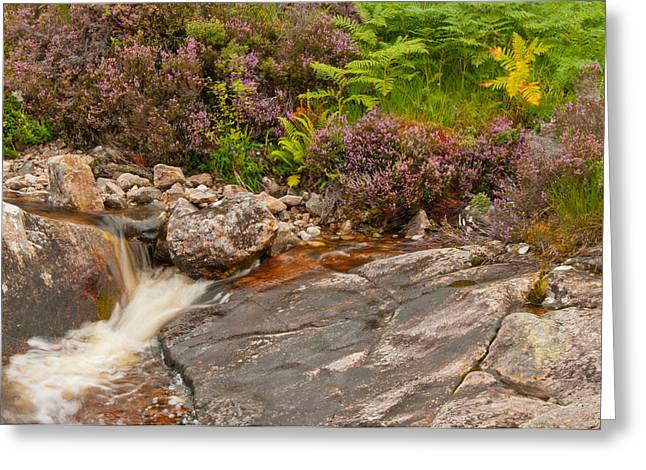Babbling Greeting Cards - Running from Heather Greeting Card by Jim Southwell
