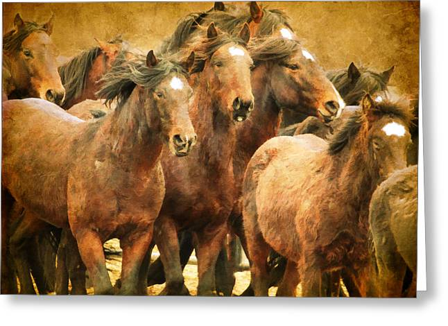 Horse In Water Paint Greeting Cards - Running Herd Greeting Card by Steve McKinzie