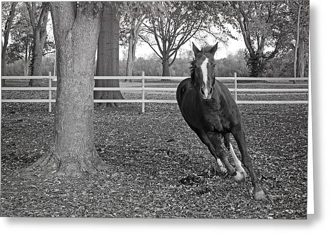 Mo Ranch Greeting Cards - Running Horse Greeting Card by Steven  Michael