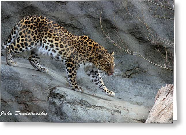 Leopard Running Greeting Cards - Running Leopard Greeting Card by Jake Danishevsky
