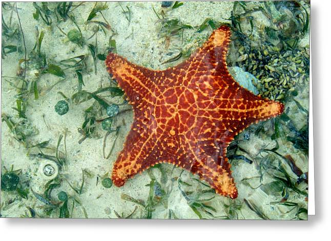 Running Starfish Greeting Card by Mary Lee Dereske